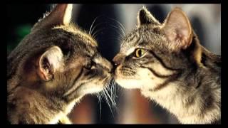 секс кошек