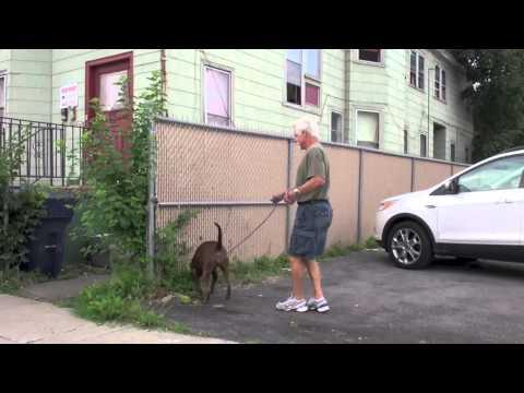 Tyler Muto Dogmanship | Highlights