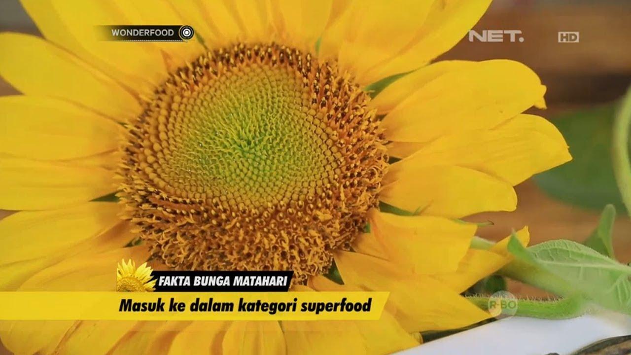 Beragam Fakta Menarik Bunga Matahari Youtube