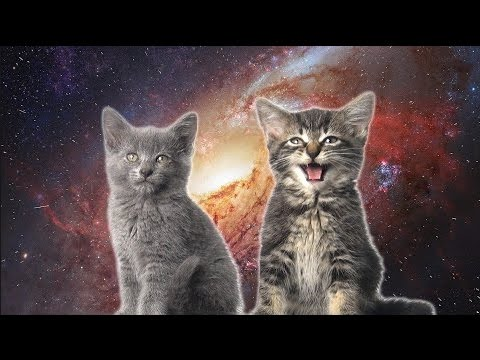 [10 Hours] Space Cats - Magic Fly (by Enjoyker) - Video & Singing Cats [1080HD] SlowTV