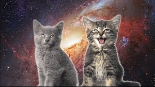 Download [10 Hours] Space Cats - Magic Fly (by Enjoyker) - Video & Singing Cats [1080HD] SlowTV Mp3 and Videos