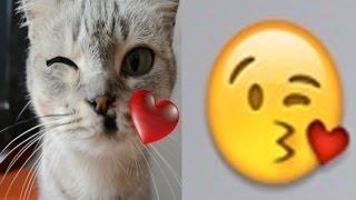 emoticones whatsapp en la vida real por mi gato emoticons rial life