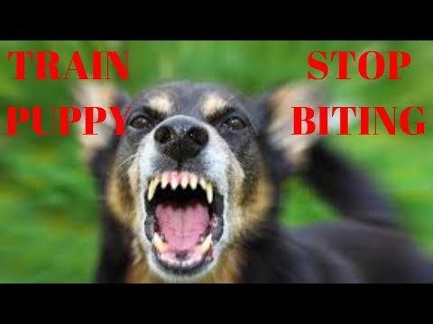 how-to-train-your-puppy-to-stop-biting