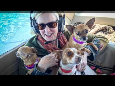 Pet for a Vet Dog Rescue Flight