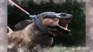 Real Hybrid Creatures in The World 2015 - The best on YouTube