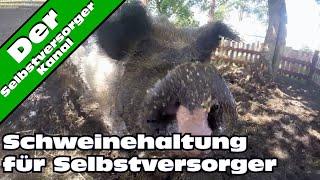 Schweinehaltung fuer Selbstversorger ganz einfach