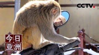 """[今日亚洲] 速览 奇趣!泰猴照镜 沉迷美貌""""无法自拔""""   CCTV中文国际"""