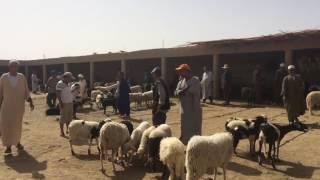 Jour de marché - Vente de chèvres et de moutons à Rissani, Maroc