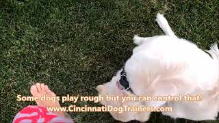 Controlling rough play with your dogs: Cincinnati Dog Trainers Off Leash K9