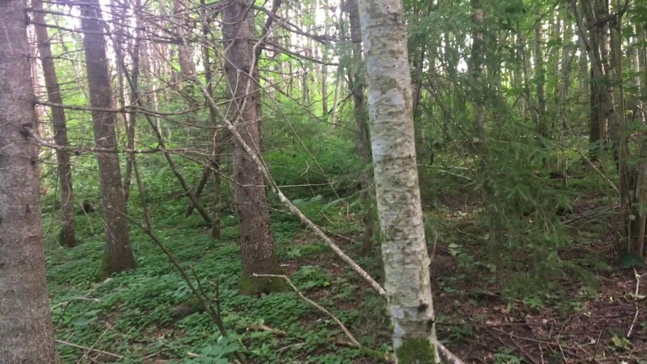 Filosofía en el bosque 24. Juicio estético.