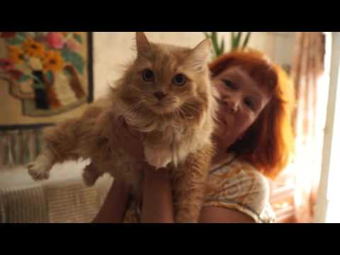 Стрижка кошек в домашних условиях