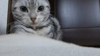 【LINEスタンプ あめちゃんとアヒルたち】ダウンロードはコチラ http://...