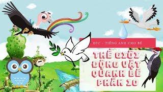 Tiếng anh cho bé - Vừa vui vừa học   Thế giới động vật quanh bé [Phần 10] - EFC