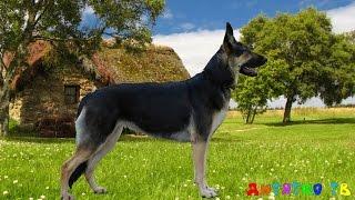 Звуки Животных для самых маленьких,собаки, кошки,коровы....