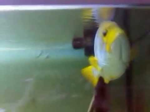 geo marine pesci grandi