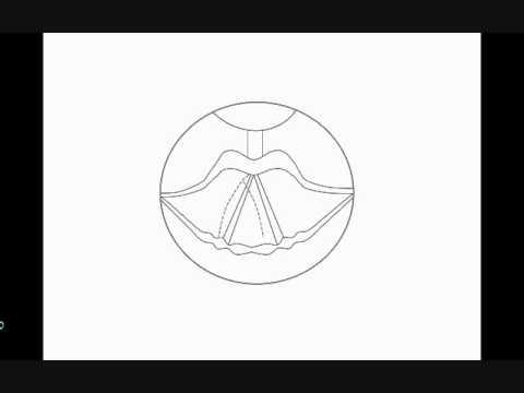 How To Draw Larynx Youtube