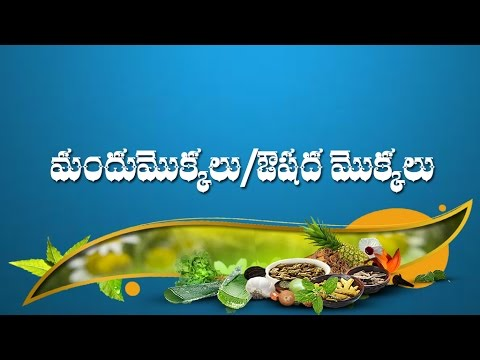 MEDICINAL PLANTS - YouTube