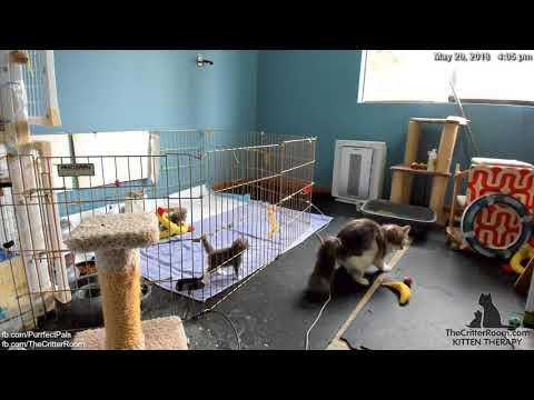 Guardian Kittens - Fence Crash