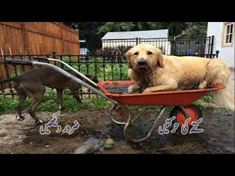 MOST AMAZING VIDEOS OF 2018 😱😎😵 FUNNY COMPILATION--FUNNY dog /Kuty ki Harktin