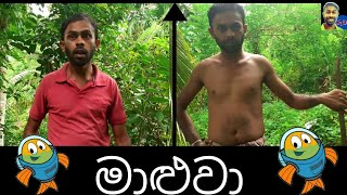 මාළුවා|sinhala comedy joke videos sri lanka 2020|ruwa production