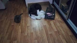 Собака сдала кошку за проделки, смотреть всем