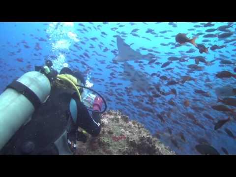 Galapagos Diving 2013