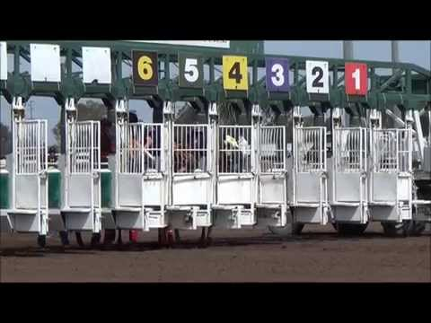 Quarter Horse Gate Workouts - April 19, 2014 at Los Alamitos Race Course