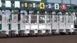 Quarter Horse Gate Workouts - April 19, 2014 at Los Alamitos Race Course