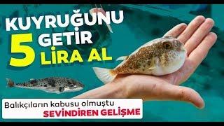 Balon Balığı Kuyruğuna 5 TL Ödül !! / Konuyu Uzmanına Sorduk