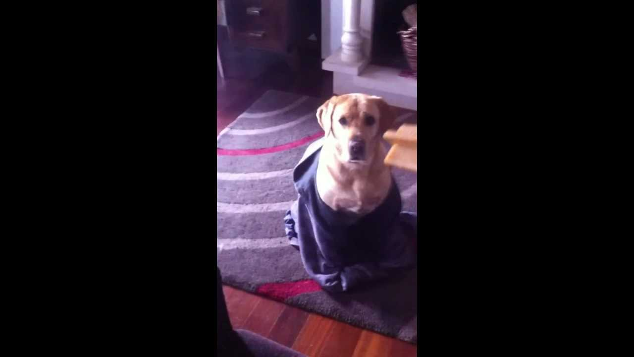 how i punish my dog for pooping in the living room - youtube