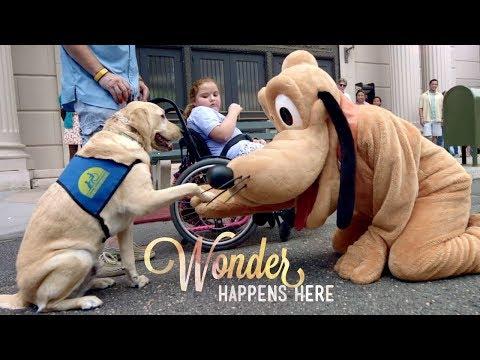 Disney Parks & Resorts TV Commercial, 'Wonder Happens Here'