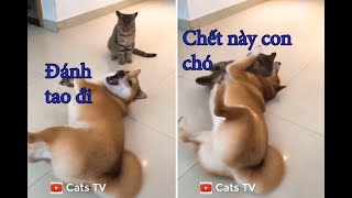chó mèo hài hước đánh nhau tới chết và cái kết cười bể bụng | tik tok chó mèo dễ thương - cats tv