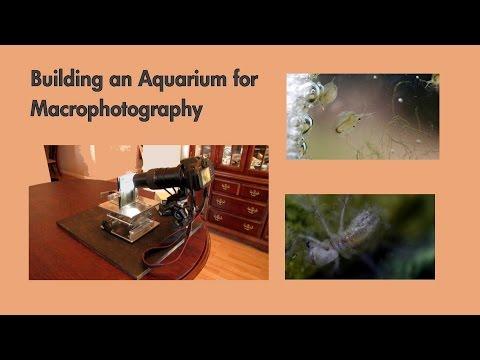 Building a macrophotography aquarium