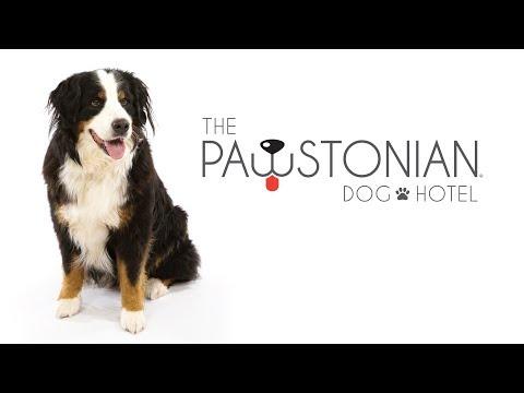 PAWSTONIAN DOG HOTEL  - Austin, Texas