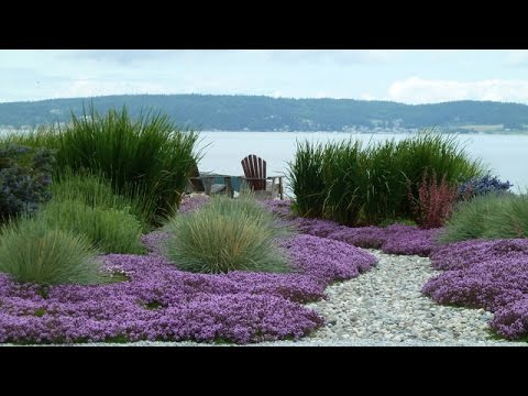 Great Landscape Plants for Coastal Areas