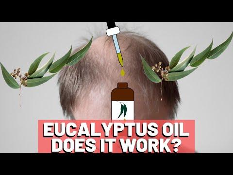Eucalyptus Oil For Hair Growth Does It HELP?