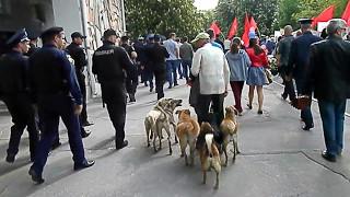 Херсон мужик и собаки