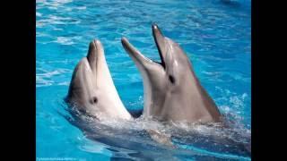 Дельфины, очень и очень умные морские ласточки