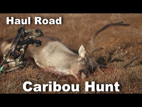 DIY Haul Road Caribou Hunt // 2019