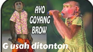 Download Video Lucu..!!! #monyet nyuci baju ga usah ditonton MP3 3GP MP4