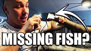 FISH WENT MISSING (Not what you think...)