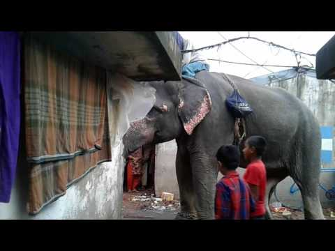 elephant earn money video.elephant videos in chittagong