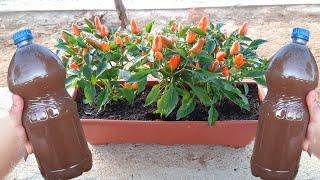 Adubo Caseiro Para Produção de Frutos e Flores Para Todas as Plantas