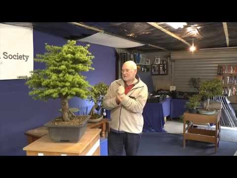 Willowbog Bonsai Workshop Intros - Cedar
