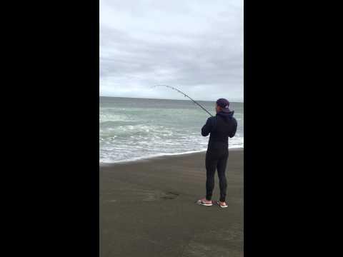 8lb surf striper northern california surf fishing youtube for Surf fishing northern california