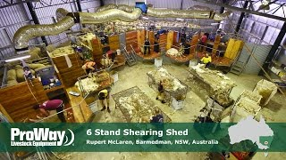 ProWay - 6 Stand Shearing Shed