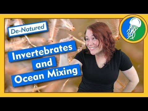 Invertebrates And Ocean Mixing - De-Natured