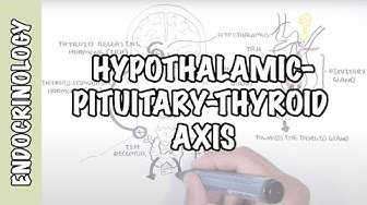 Hypothalamic Pituitary Thyroid Axis (regulation, TRH, TSH, thyroid hormones T3 and T4)