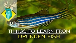 TL;DR - Things to Learn from Drunken Fish