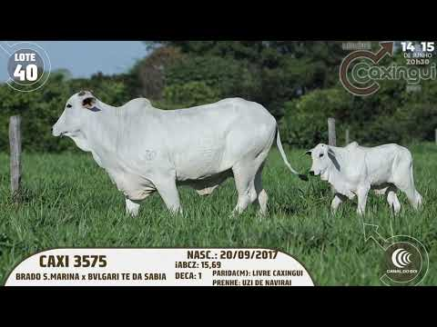 LOTE 40   CAXI 3575